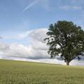 120710 02 美瑛「哲学の木」