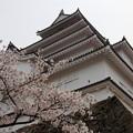 写真: 福島 鶴ヶ城 130423 02