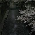 Photos: 終焉の桜