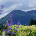 Photos: 今日のお山