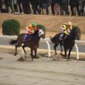 川崎記念2017 1週目オールブラッシュをつつくミツバ