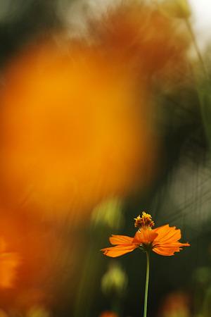 黄色い花畑で