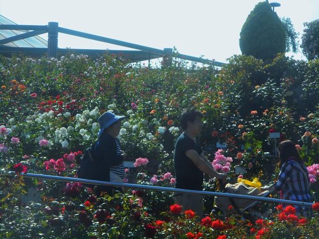 ローズヒルは花盛り6~和みと癒しの空間~