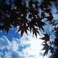 写真: 初冬の空