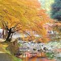 活龍水(佛通寺川)の黄葉&紅葉