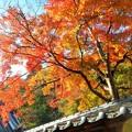 見上げれば 大方丈の紅葉 in 大本山仏通寺