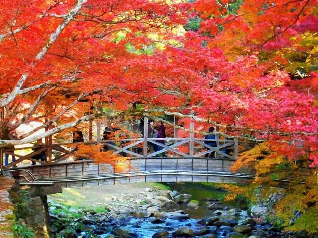 巨蟒橋(鞘橋)の秋 in 大本山仏通寺