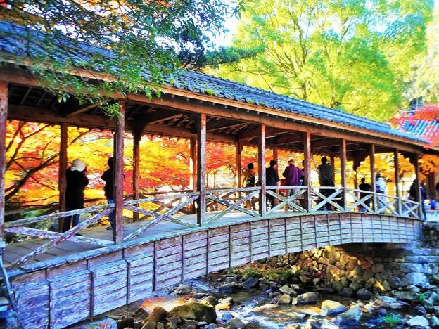 Photos: 鞘橋(巨蟒橋)の燃える秋 in 大本山仏通寺