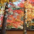 杉木立の参道の紅葉 in 古刹仏通寺