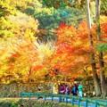 永徳院の紅葉と 仏通寺川(活龍水)のせせらぎ