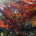 写真: 晩秋の仏通寺川を歩く