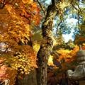 写真: 総門前の秋 in 大本山仏通寺