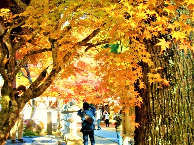 写真: 紅葉の撮影スポット
