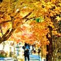 紅葉の撮影スポット