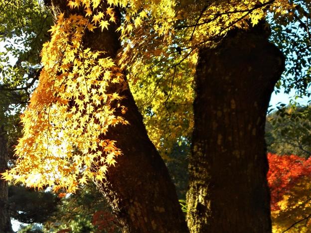 備後路の秋