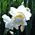 甘い香りで春めいて