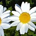写真: 春めく季節