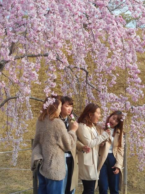 満開の紅枝垂桜の下にて@さくら娘たち