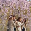 Photos: 満開の紅枝垂桜の下にて@さくら娘たち