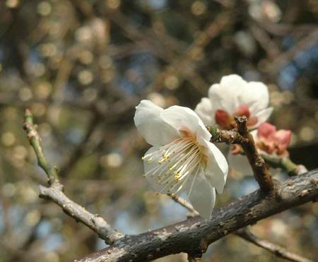 houkokujinjya-230227-8