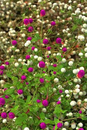 HDR POPな花々
