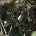 写真: 巣材集め
