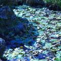 陽光に輝く池( ´艸`)