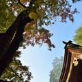 朝日を浴びて高木色づく秋のひと時