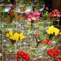 写真: エトランスの花