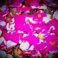 写真: 薔薇ピカソの絨毯
