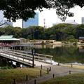 写真: 潮入りの池