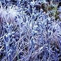 霜の花に感動です!