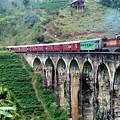 Photos: スリランカ鉄道、9 Arch Bridge と言う名所だそうです