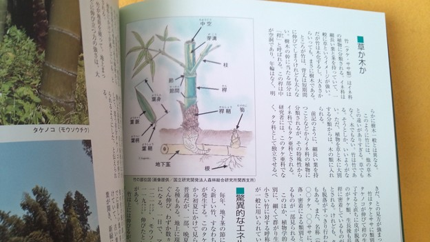 みほん2 常陽藝文 2016年12月号 いばらき 竹百科 植物 雑誌