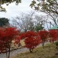 Photos: 万葉の森紅葉