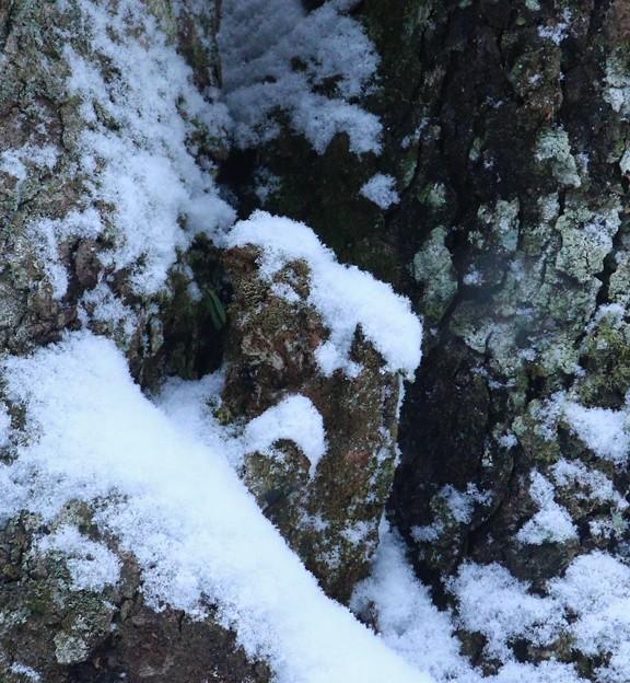 雪をかぶった☆トミー命名、合掌観音様