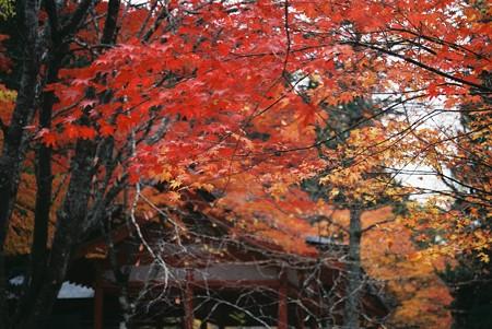 11.10高野山紅葉