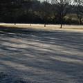 公園の霜 D0666