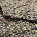 Photos: Roadrunner (3)