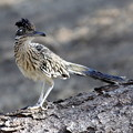 Photos: Roadrunner (6)