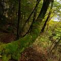 Photos: 樹に生きる
