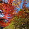 Photos: 山もみじ