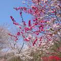 Photos: 春宴