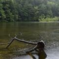 写真: 雨の神池