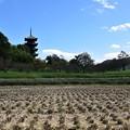 写真: 備中国分寺にも秋 五重塔