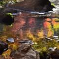 写真: 川面の秋色