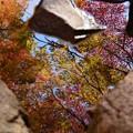 写真: 川辺で見つけた小さな秋