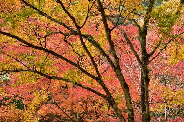 写真: 目の前に広がる秋色