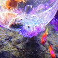 紫陽花の海3