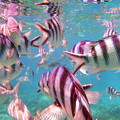 Photos: さかな 魚 サカナ